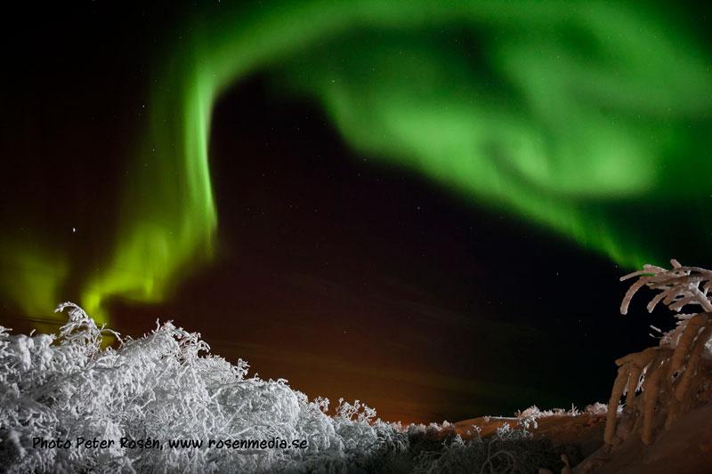 green auroras for st patricks day (11)