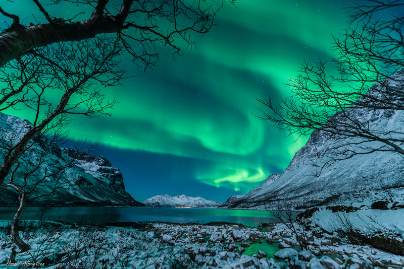 green auroras for st patricks day (3)