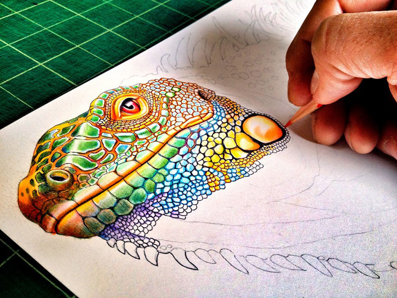 incredibly detailed pencil crayon drawings of iguana and chameleon by tim jeffs (3)