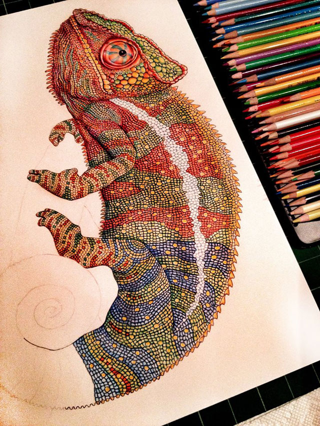 incredibly detailed pencil crayon drawings of iguana and chameleon by tim jeffs (9)