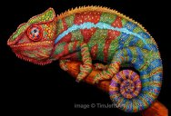 Tim Jeffs Draws Incredibly Detailed Lizards Using Pencil Crayons