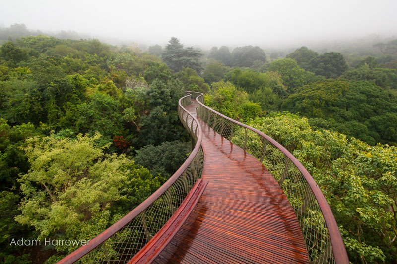 Kirstenbosch tree canopy walkway cape town south africa (1)