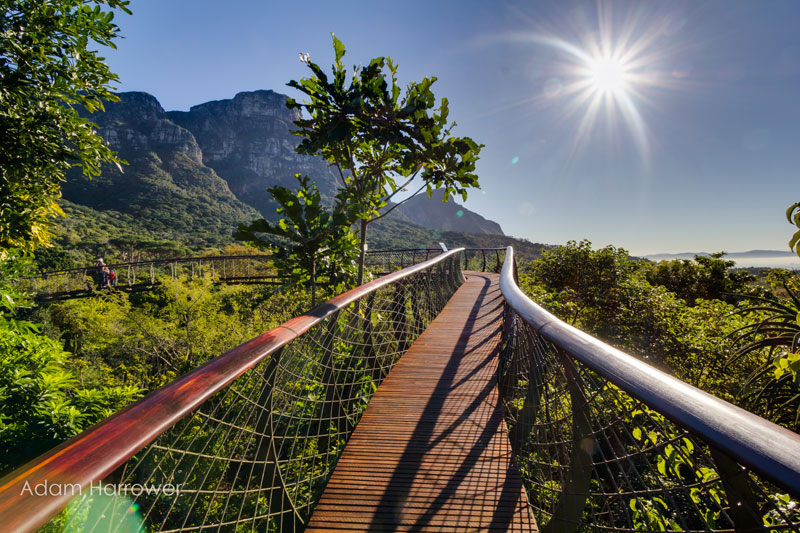 Kirstenbosch tree canopy walkway cape town south africa (10)