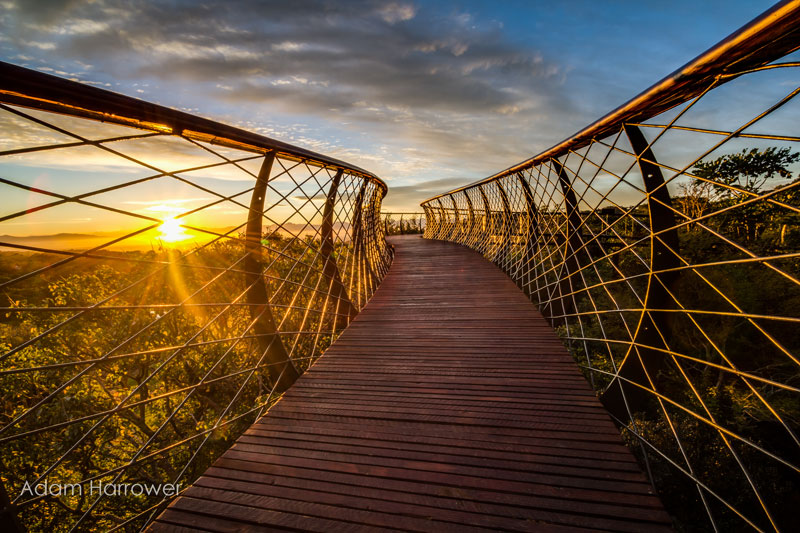 Kirstenbosch tree canopy walkway cape town south africa (15)