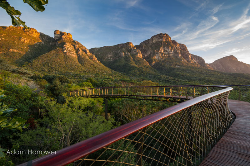 Kirstenbosch tree canopy walkway cape town south africa (7)