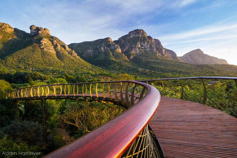 Kirstenbosch tree canopy walkway cape town south africa (8)