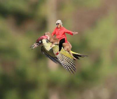 The Internet is Having a Field Day with the Bird Riding Weasel (1)