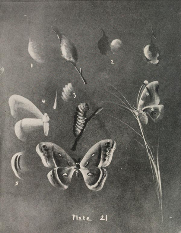blackboard chalk art from 1908 by frederick whitney (15)