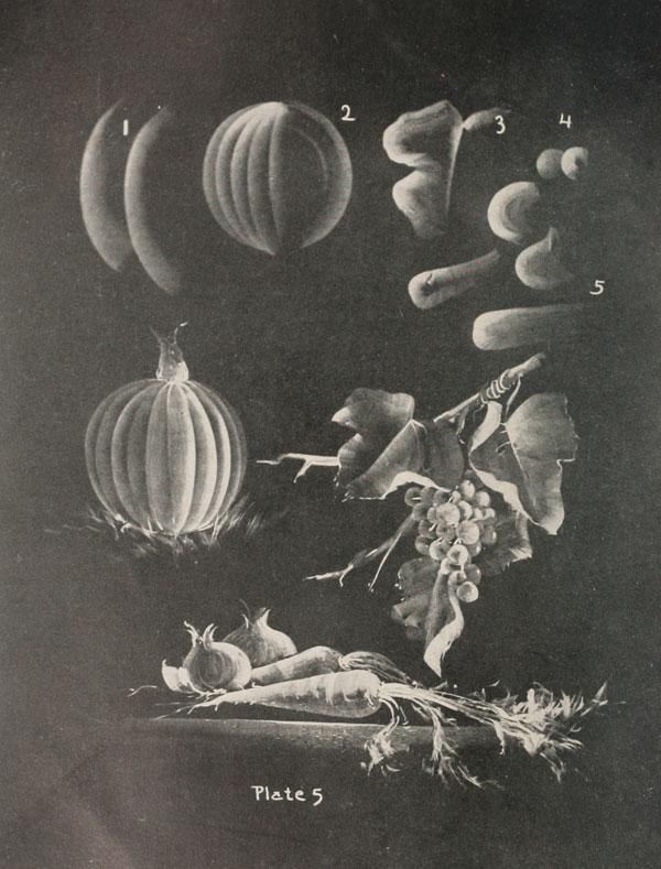 blackboard chalk art from 1908 by frederick whitney (4)