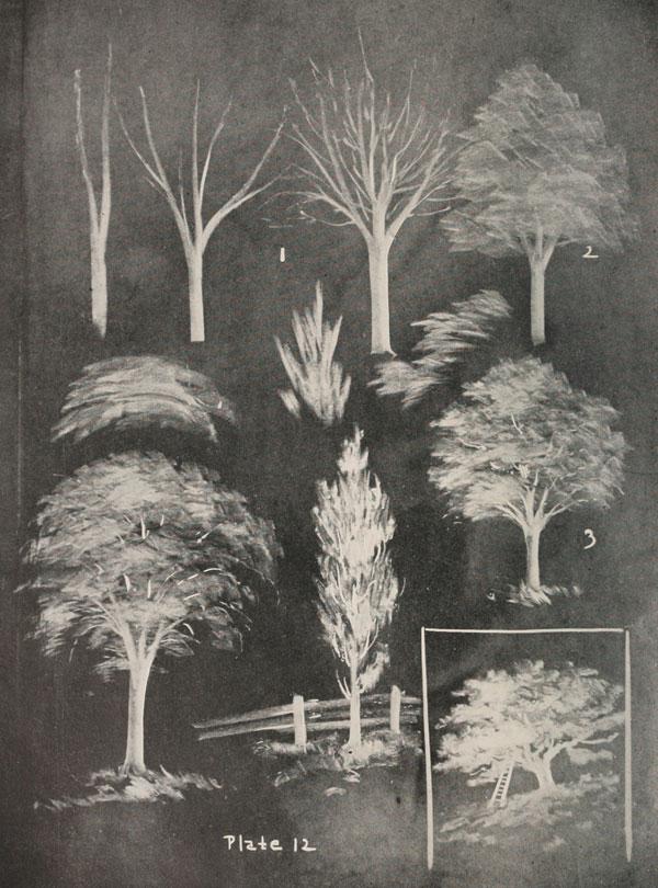 blackboard chalk art from 1908 by frederick whitney (7)