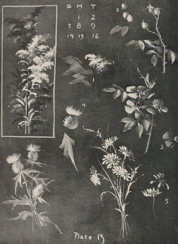 blackboard chalk art from 1908 by frederick whitney (8)