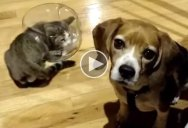 Dog Has No Idea What the Cat is Doing