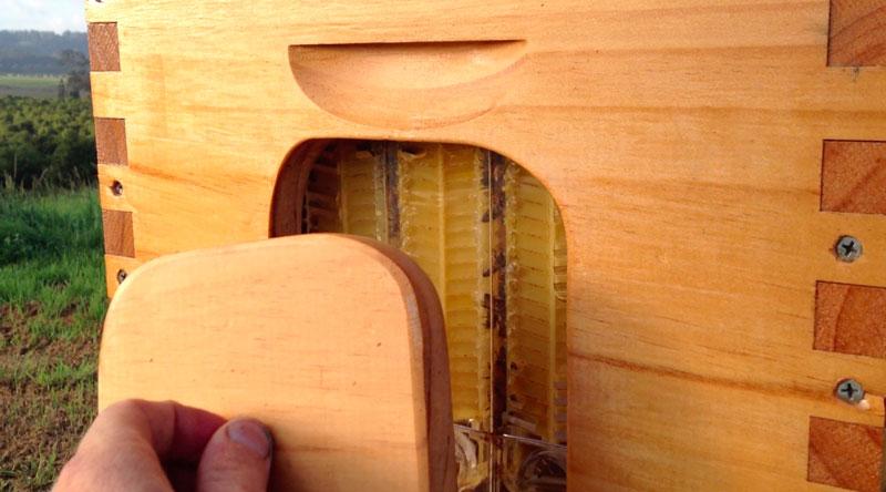 flow hive honey on tap (10)