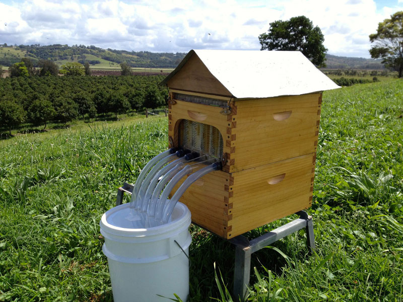 flow hive honey on tap (3)