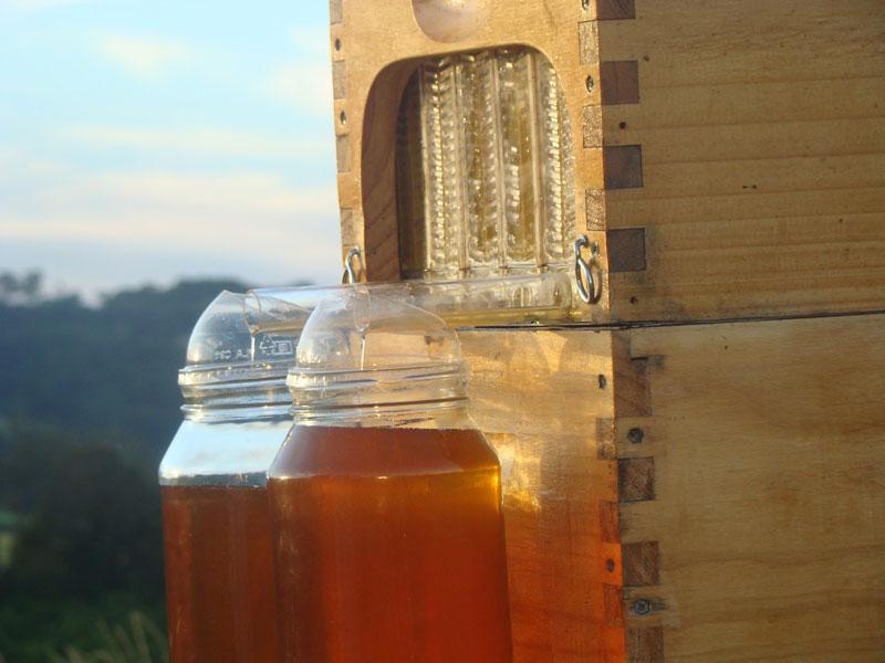 flow hive honey on tap (4)