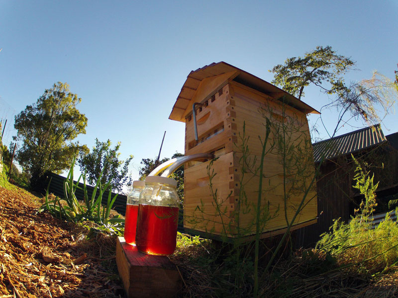 flow hive honey on tap (5)