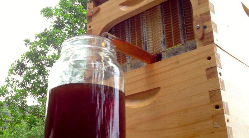 flow hive honey on tap (7)