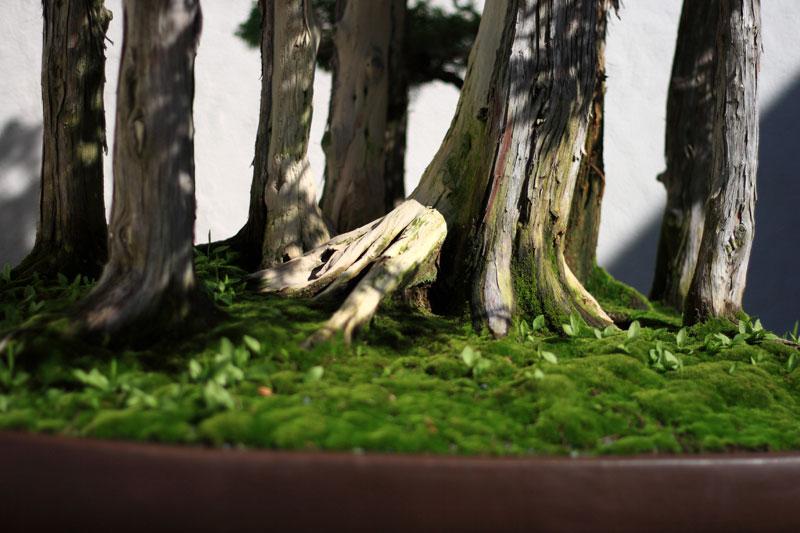 goshin by john naka bonsai forest for grandchildren (6)