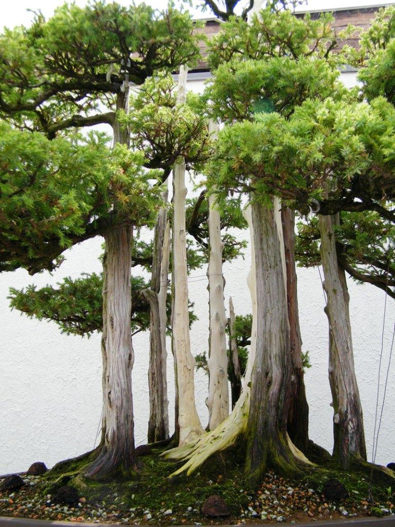 goshin by john naka bonsai forest for grandchildren (7)