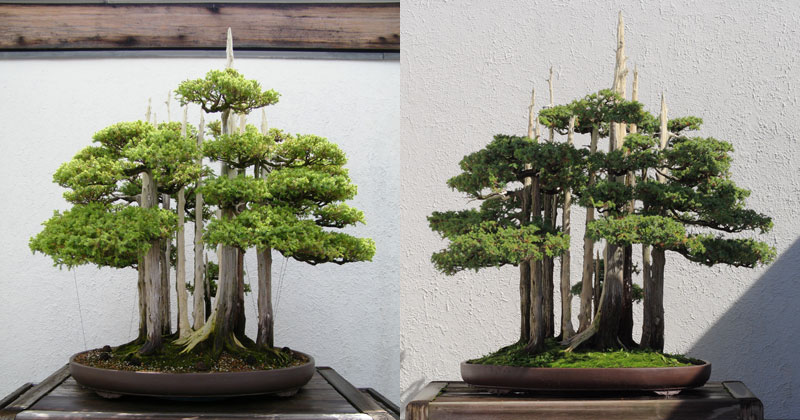 This Bonsai Master's Greatest Work of Art is a Loving Tribute to his Grandkids