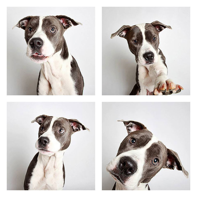 humane society of utah photo booth dog pics to increase adoption 1 These 18 Before and After Photos of Adopted Dogs Will Warm Your Heart