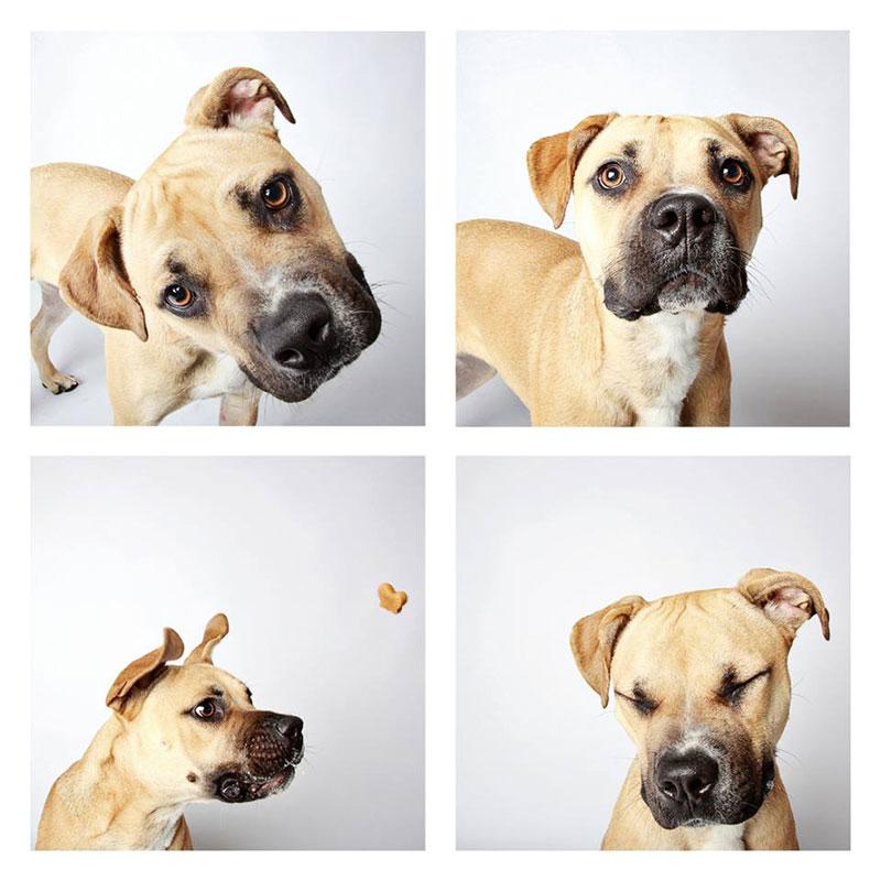 humane society of utah photo booth dog pics to increase adoption (10)