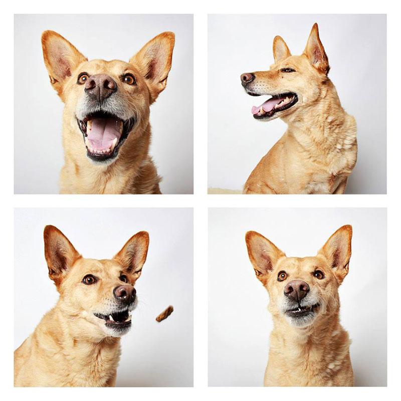 humane society of utah photo booth dog pics to increase adoption (11)