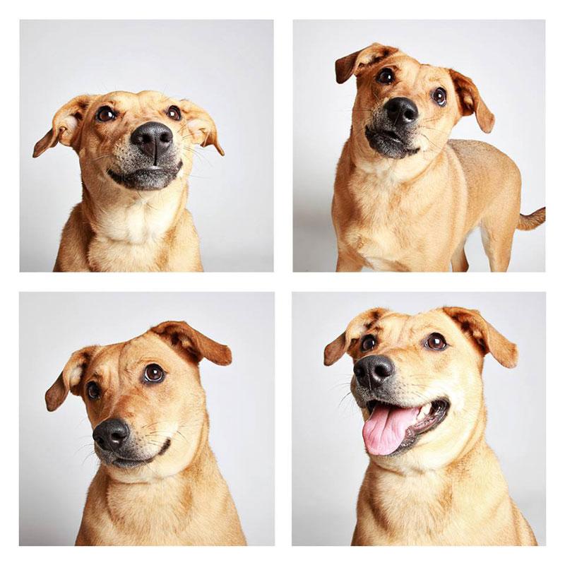 humane society of utah photo booth dog pics to increase adoption (12)