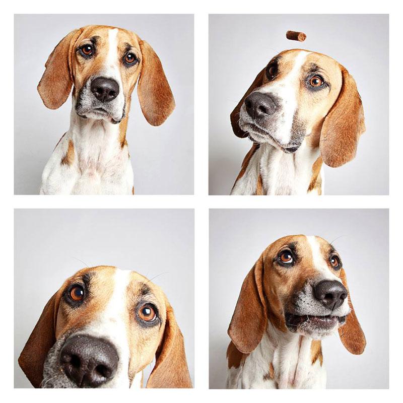 humane society of utah photo booth dog pics to increase adoption (13)