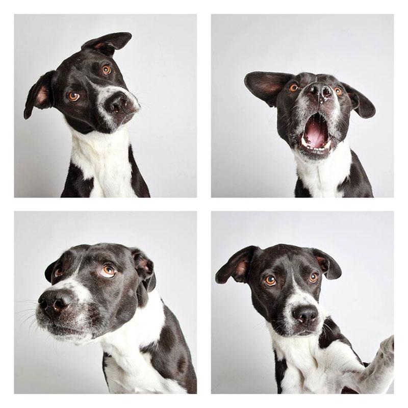 humane society of utah photo booth dog pics to increase adoption (17)