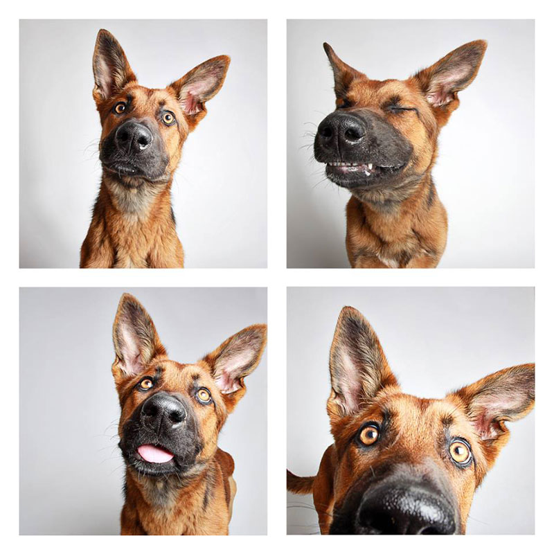 humane society of utah photo booth dog pics to increase adoption (18)