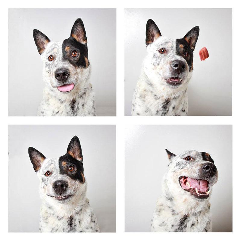 humane society of utah photo booth dog pics to increase adoption (19)