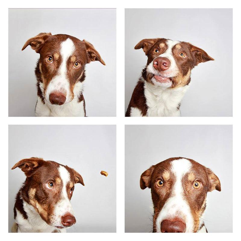 humane society of utah photo booth dog pics to increase adoption (2)