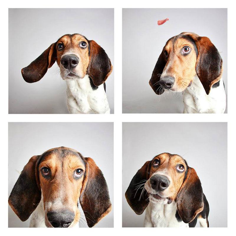 humane society of utah photo booth dog pics to increase adoption (20)