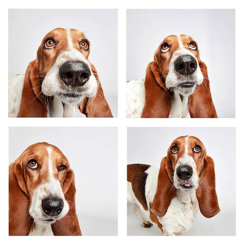 humane society of utah photo booth dog pics to increase adoption (22)