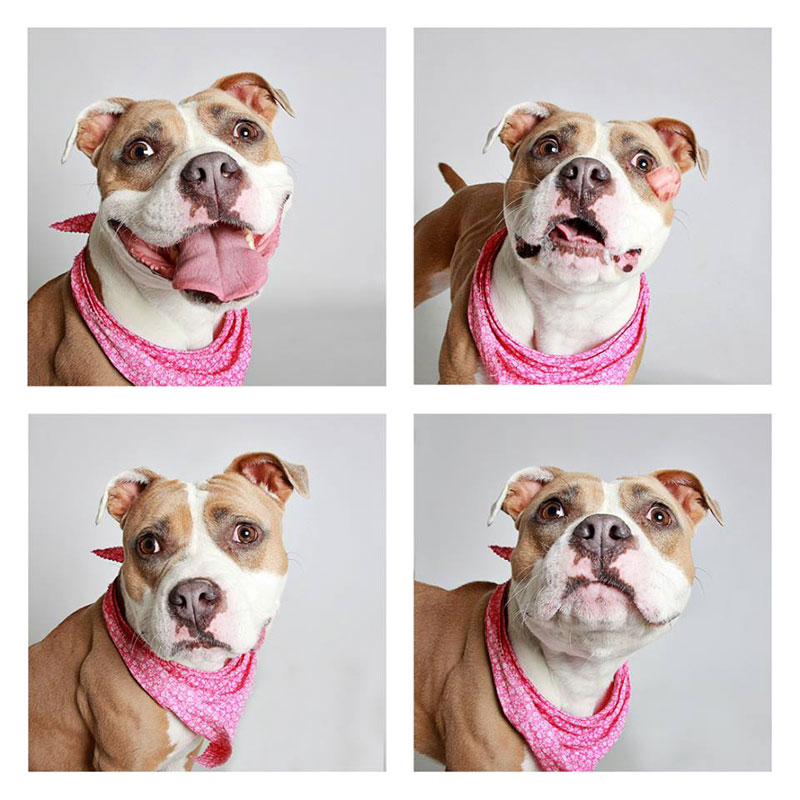 humane society of utah photo booth dog pics to increase adoption (23)
