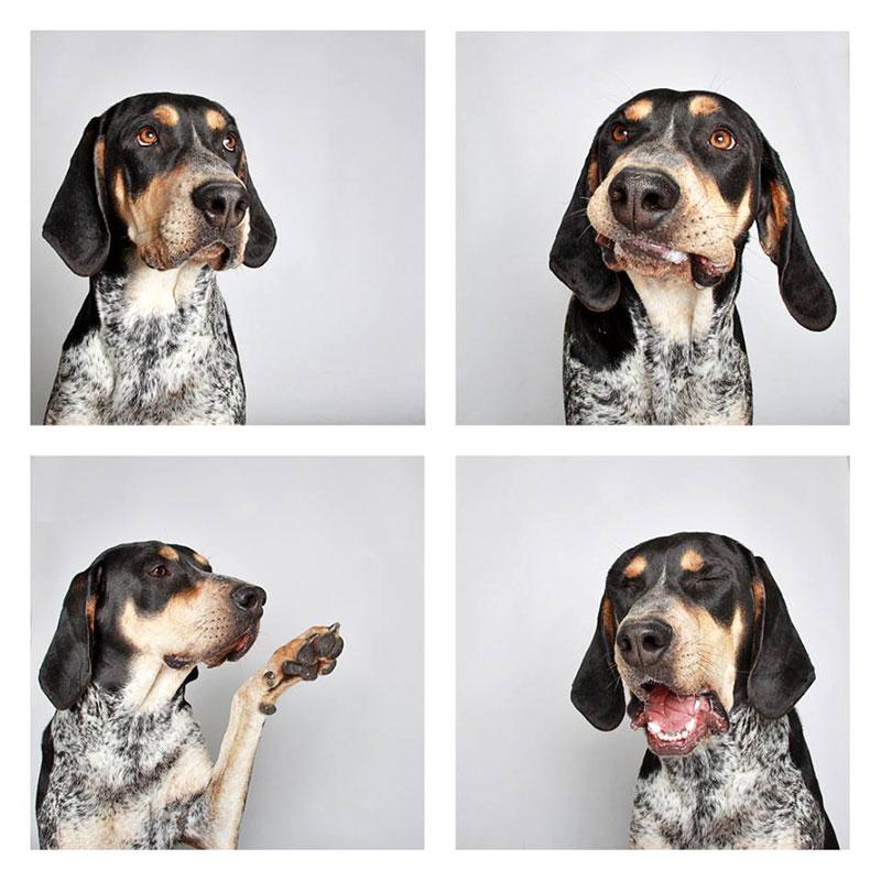 humane society of utah photo booth dog pics to increase adoption (24)