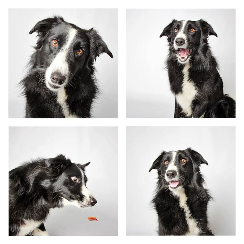 humane society of utah photo booth dog pics to increase adoption (6)