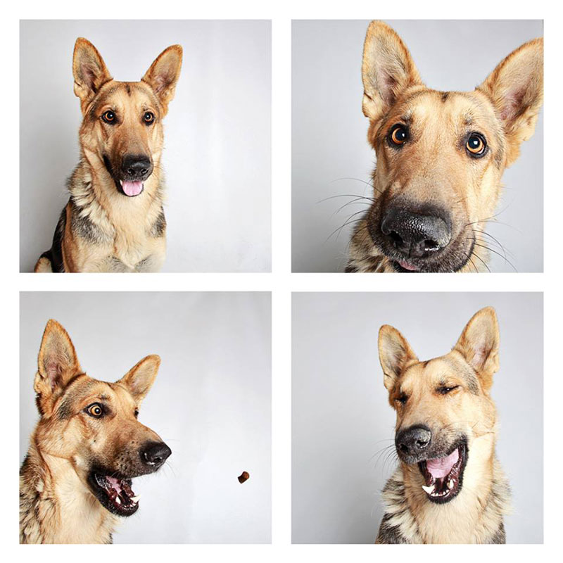 humane society of utah photo booth dog pics to increase adoption (7)