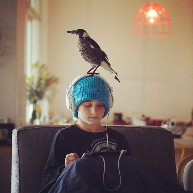 penguin the magpie on instagram by cameron bloom (12)