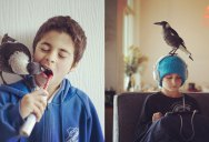 Abandoned Magpie Roams Free but Always Returns to Family that Rescued Her