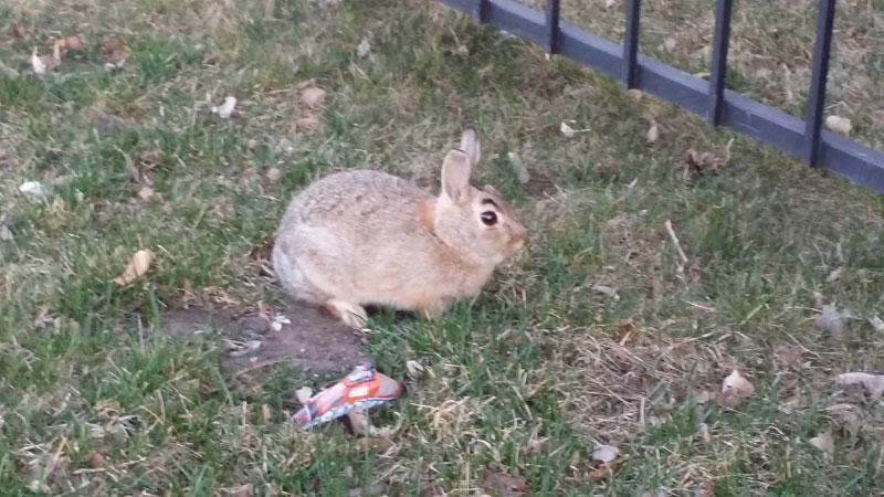 suspicious rabbit