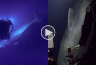 ROV Encounters Sperm Whale 2000 ft Underwater During Livestream