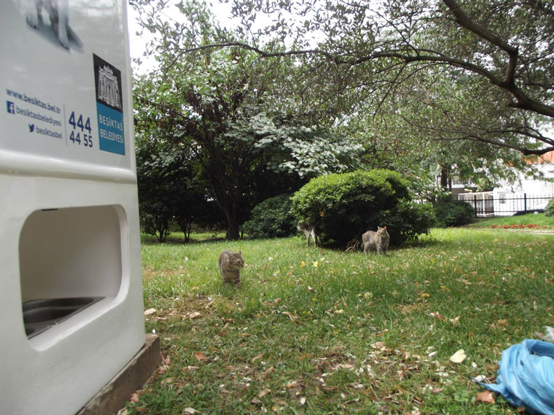 Vending Machine Feeds Stray Animals in Exchange for Recycled Bottles (10)
