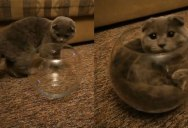 This Cat is Determined to Sit in This Fishbowl