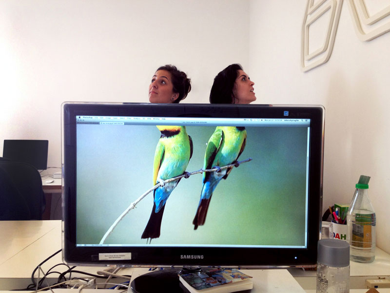 Coworkers-Add-their-Heads-to-Animals-on-Desktop Backgrounds (18)
