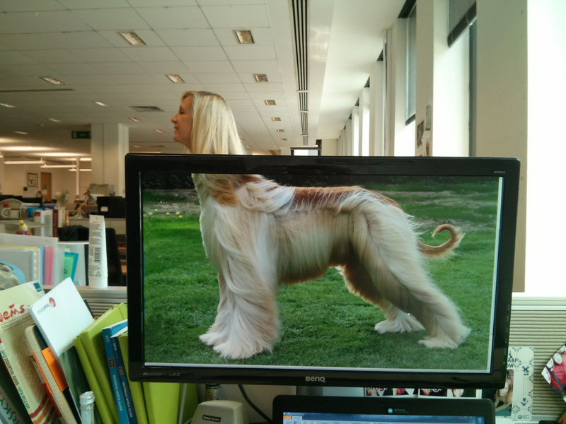 Coworkers-Add-their-Heads-to-Animals-on-Desktop Backgrounds (21)