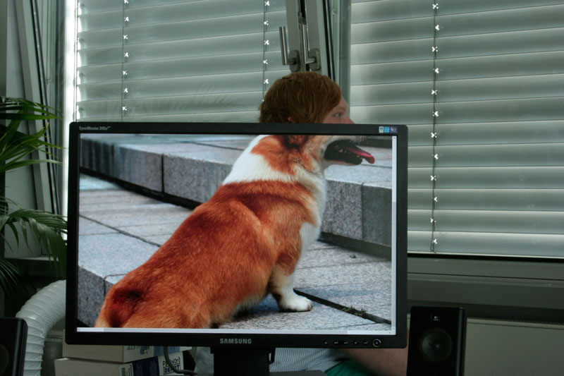 Coworkers-Add-their-Heads-to-Animals-on-Desktop Backgrounds (22)