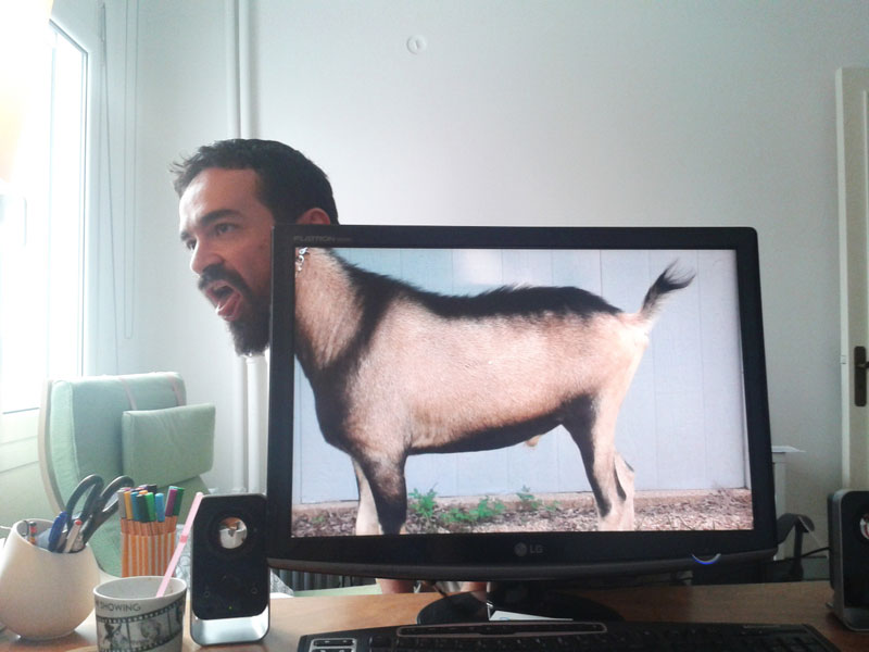 Coworkers-Add-their-Heads-to-Animals-on-Desktop Backgrounds (24)