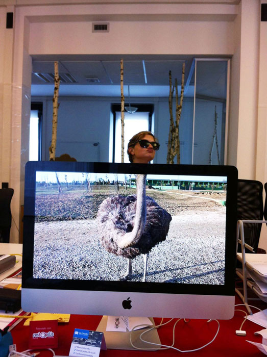 Coworkers-Add-their-Heads-to-Animals-on-Desktop Backgrounds (26)
